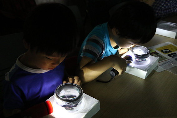 霧箱の中を観察し、宇宙線を探す子どもたち